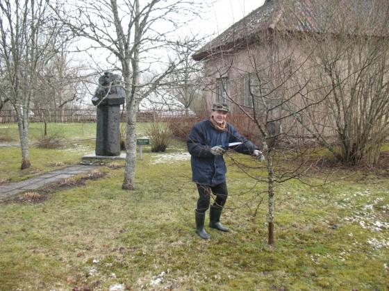 15. aprīlis - B. Podiņš izzāģē zarus